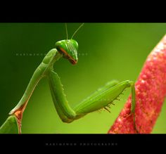 AMAZING insect photos!  This one would make a cool writing prompt.