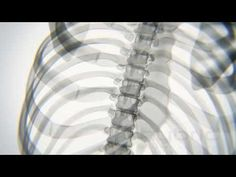 X-ray Body in Motion - Yoga - YouTube
