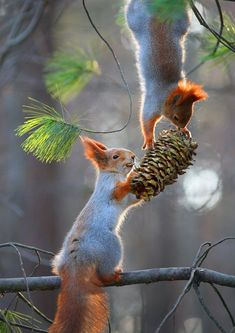 Wonderful World of Animals. This page is about cute and funny animals and pets. Squirrel Pictures, Animal Pictures, Nature Animals, Animals And Pets, Wild Animals, Beautiful Creatures, Animals Beautiful, Cute Baby Animals, Funny Animals