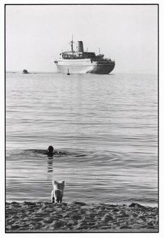 Elliot Erwitt. Ελλάδα Μύκονος 1976 World Photography, Photography Gallery, Animal Photography, Street Photography, Elliott Erwitt, Image Makers, Magnum Photos, Metropolitan Museum, Black And White Photography