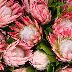 More than just another blossom, protea flowers are blooms with attitude. Australian Native Flowers, Australian Plants, Australian Garden, Protea Wedding, Fall Wedding Flowers, Bridal Flowers, Wedding Bouquets, Protea Bouquet, Protea Flower
