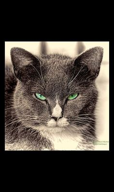 Those Eyes  #cat green eyes amazing aww omg #by Richard Marlow on 500px.com