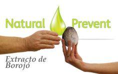Borojó, más que un afrodisiaco:   La fruta de Borojó es altamente energética, con un alto contenido de sólidos solubles y proteínas. El Borojó tiene grandes cantidades de aminoácidos y fósforo esenciales para los humanos.