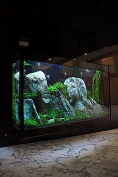 21 Best Aquascaping Design Ideas to Decor Your Aquarium - Tips Inside - homelovers