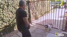 Dog Whisperer with Cesar Millan | Season 9 Episode 9 | Fear Factor | Ful...