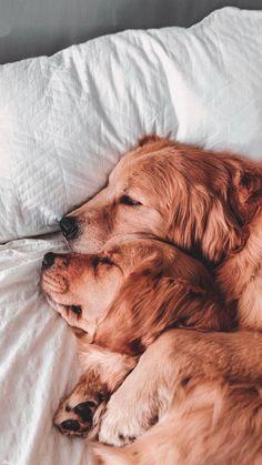 Source by Kliumna dog dog memes dog videos videos wallpaper dog memes dog quotes dogs dogs pictures dogs videos puppies puppy video Cute Dogs And Puppies, Pet Dogs, Dog Cat, Pets, Doggies, Funny Puppies, Funny Dogs, Cute Dog Wallpaper, Tier Wallpaper