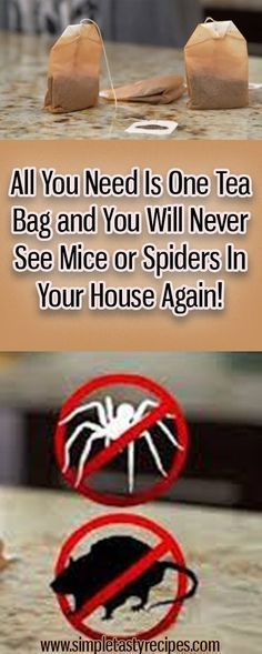 All You Need Is One Tea Bag and You Will Never See Mice or Spiders In Your House… – The Environmental Alternative For Safer Pest Control Cleaning Solutions, Cleaning Hacks, Cleaning Products, Cleaning Schedules, Household Products, Household Tips, Just In Case, Just For You, Guter Rat
