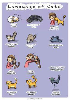 .Understanding cats. #cats #pets