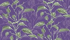 Minna Wallpaper A climbing leaf design in green with shadow in purple on a purple background