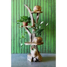 Garden Age Supply Harini Driftwood Stand with Teak Shelves – Modish Store