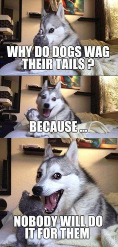 Bad Pun Dog Meme Generator - Imgflip