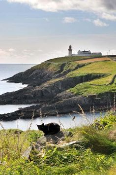 West Cork, County Cork, Ireland. Please note the black cat on the rock.
