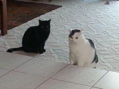 Susi Und Mia Katze | Pawshake