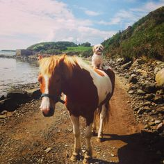 """Who said humans invented Horse Riding?!!! -> """"Amy Fadden's rescue dog Abby hitches a ride on her friend Biscuit in Westport, Co. Mayo, Ireland"""""""