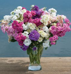 "Stock An excellent choice for flower bouquets. Pinching is required for a well-balanced spray form. Colors are subject to slight variance due to seed availability. Ht. 18-24"".  This stunning Cut Flower is also Edible!"