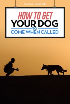 How to get your dog to come when called >> http://doggiedesires.com/how-to-get-your-dog-to-come-when-called/