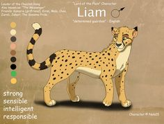 And here's a band new sheet for my Liam! He's my fursona Kamaria's boyfriend and the leader of my band of cheetahs. Liam Ref Sheet Animal Sketches, Animal Drawings, Cheetah Drawing, Cat Drawing Tutorial, Lion King Fan Art, Carnivore, Cat Comics, Disney Lion King, Fox Art