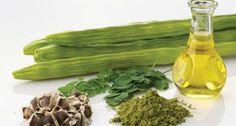 Why Moringa Oleifera is so powerful... | Julia Bauer | Pulse | LinkedIn