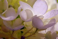Pastel Purple Pleasure by Lisa Wooten