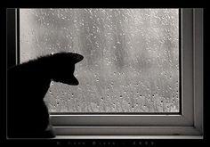 kitten, raindrops