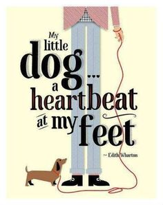 A heartbeat at my feet.                                                                                                                                                                                 More