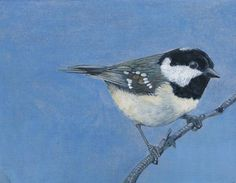 "Saatchi Online Artist: Donna McGlynn; Oil, 2012, Painting ""Coal Tit on Blue"""