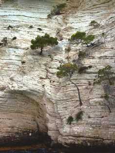 God's amazing creation - He gives power to grow life from harden rock.  Hmmm...sort of like hardened hearts. :-)