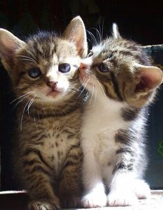 Kittens...they look like my zooey and oscar when they were babies.