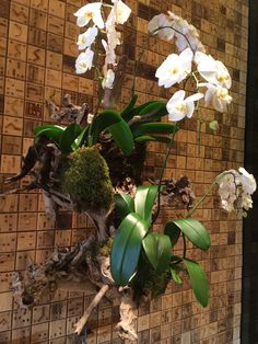 Driftwood & Orchid wall hanging...must have in the new place. From Christian Louboutin in Miami Design District