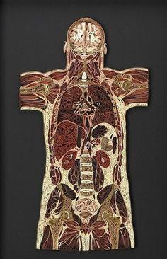 Quilling Anatomy