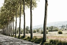 The perfect road... in Languedoc, France