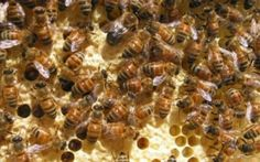 With the honey harvest getting ready to ramp up in September, Virginia officials are encouraging honey lovers to take advantage of a favorable harvest.