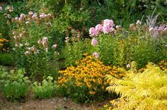 Butterfly Garden-Phlox