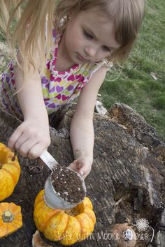 Growing a Pumpkin in a Pumpkin; fun idea right? This is another one of those projects I found on Pinterest that had nothing but a picture...