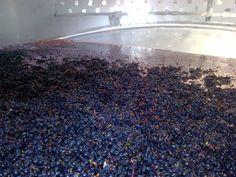 grapes - waiting...