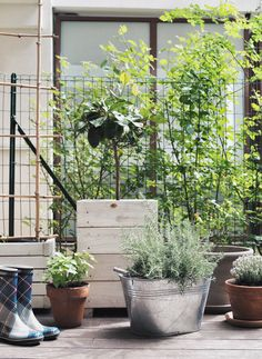 Une ambiance cocooning et végétale sur notre terrasse | Louise Grenadine - blog lifestyle à Lyon Slow, Lifestyle, Plants, Inspiration, Home Decor, Balconies, Terraces, Biblical Inspiration, Decoration Home