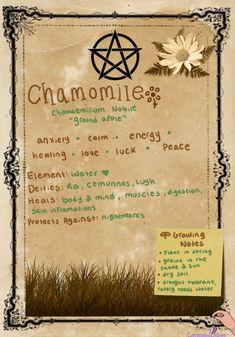 lavendulamoon – wiccan – Home Recipe Witchcraft Herbs, Witchcraft Spell Books, Green Witchcraft, Wiccan Magic, Wiccan Witch, Wiccan Spells, Magick, Magic Herbs, Herbal Magic