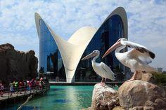 A Valencia, per esplorare l'Oceano - Viaggi