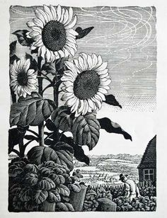 Charles Frederick Tunnicliffe (British, 1901-1979). Sunflowers in a Kent Garden. 1945.