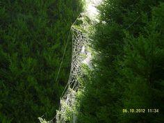 Spiderweb - home