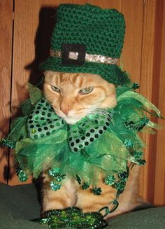 time for a st. patrick's day purr-ade.