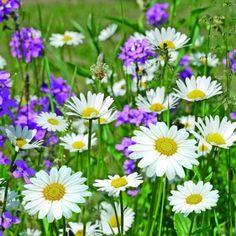 Ambiente,  Flowers - Magariten,  Everyday,  lunchnapkins,  flowers