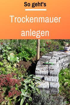 Hydrangea Seeds, Hydrangea Care, Types Of Colours, All Vegetables, Garden Soil, Potting Soil, Amazing Flowers, Indoor Plants, Shrubs