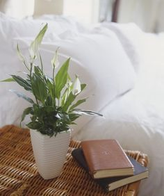 If you often forget to water your plants, pick up one of these low-maintenance ones: These Peace Lilies actually need to dry out between waterings, meaning you can wait longer.