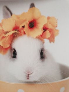 Justine likes wearing flowers. Bunny rabbits wearing a crown of flowers.
