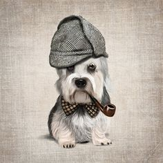 A Dandie Dinmont Terrier on rustic background poster by SparaFuori, $34.00
