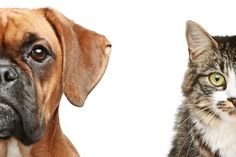 7 Things Only Senior Cat Owners Understand Why Dogs Lick, Ask A Vet, Cat Vs Dog, Boxer And Baby, Pet Store, Fur Babies, Your Pet, Cute Animals, Animals Dog