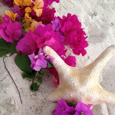 Bougainvillea circle with starfish Wedding Set Up, Perfect Wedding, Bougainvillea, Starfish, Weddings, Wedding, Marriage, Mariage