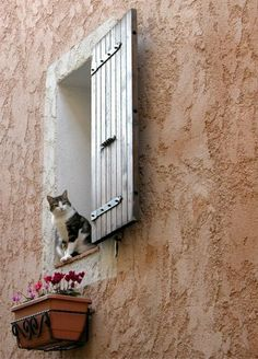 bellasecretgarden:  Provence ~ France(via Pin by Maryanne on Cats in windows | Pinterest)