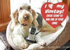 My GBGV Life | Enter to win one #Vimtag VT361 camera | catch your pet in action when you are away from home from your smartphone, tablet, or computer #sponsored